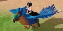 安稳解说金刚鹦鸟 又一个带特效的飞天坐骑视频